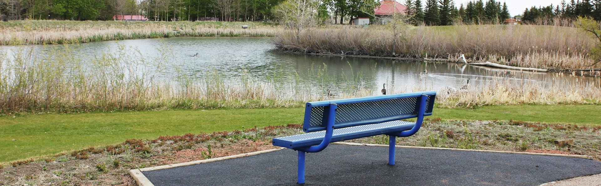 Blue park bench with pond in the background.
